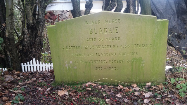 Blackie the War Horse